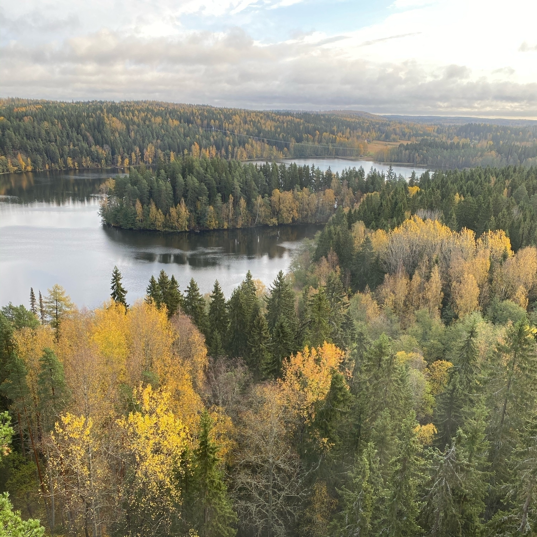 forest and lake, fall colours everewhere