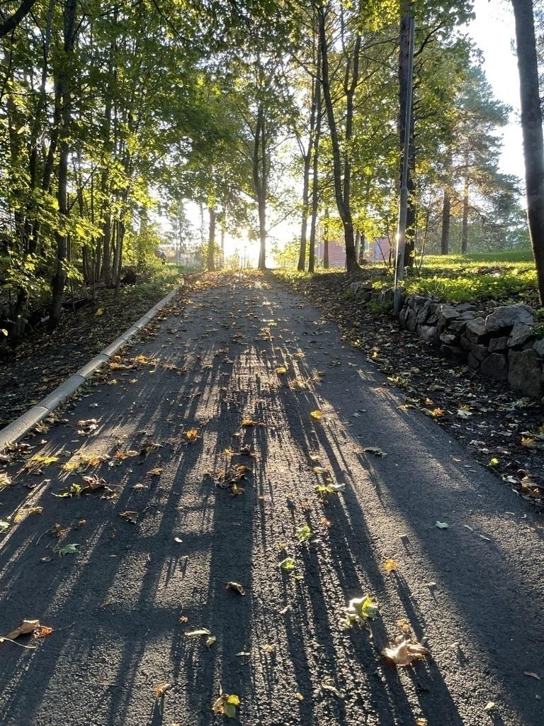 some autumn leaves on a bike lane, sun shining through the trees