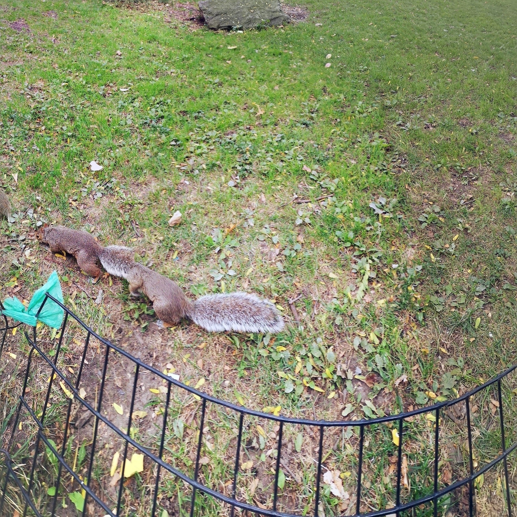 panorama pic of a moving squirrel creating a squirrel tube