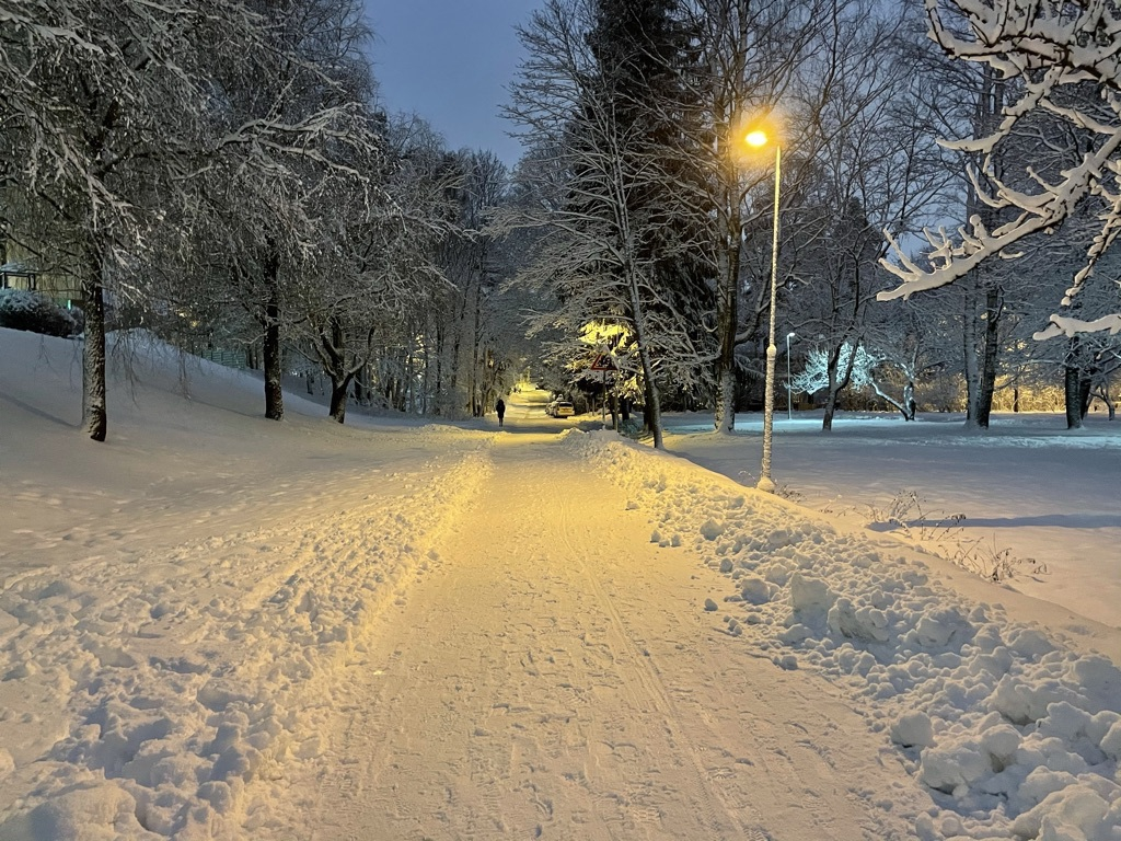 snowy trees, a plowed pathway, streetlights