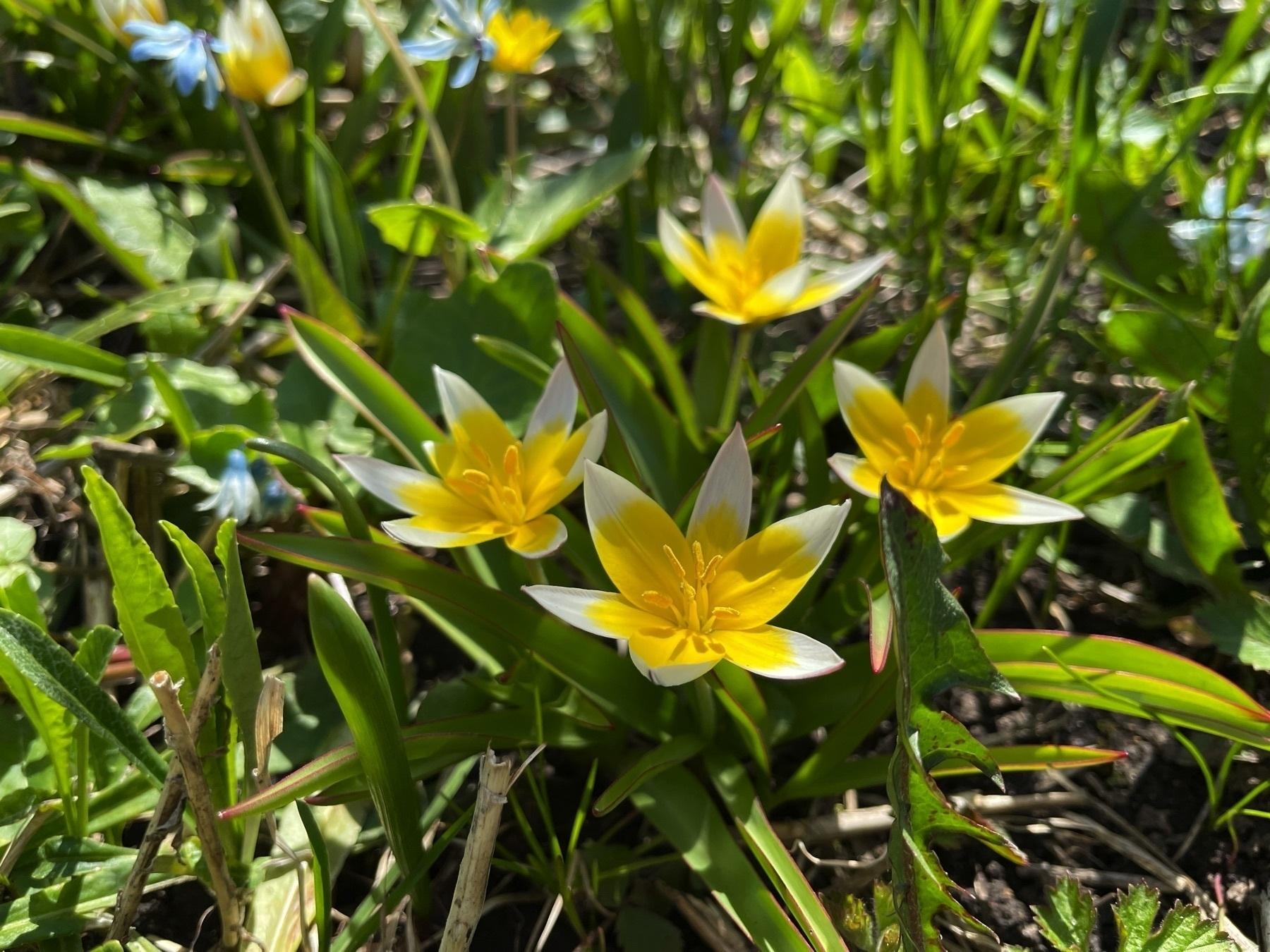 close up of flowers in a garden