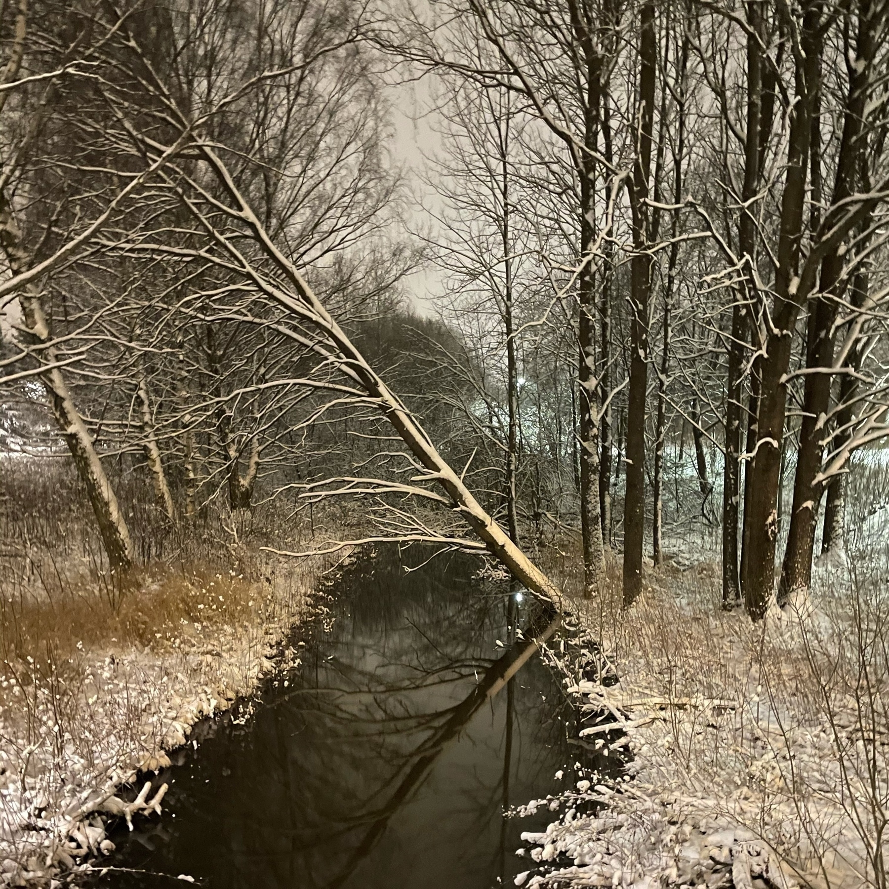 snowy trees leaning over a dark stream still flowing free