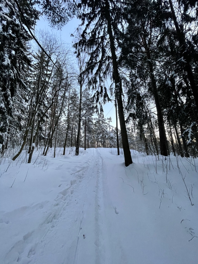 wintery track in forest