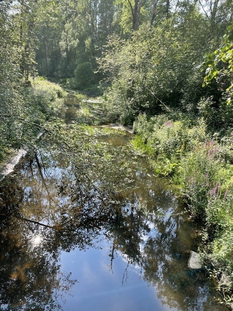 stream in a forest on a hot day