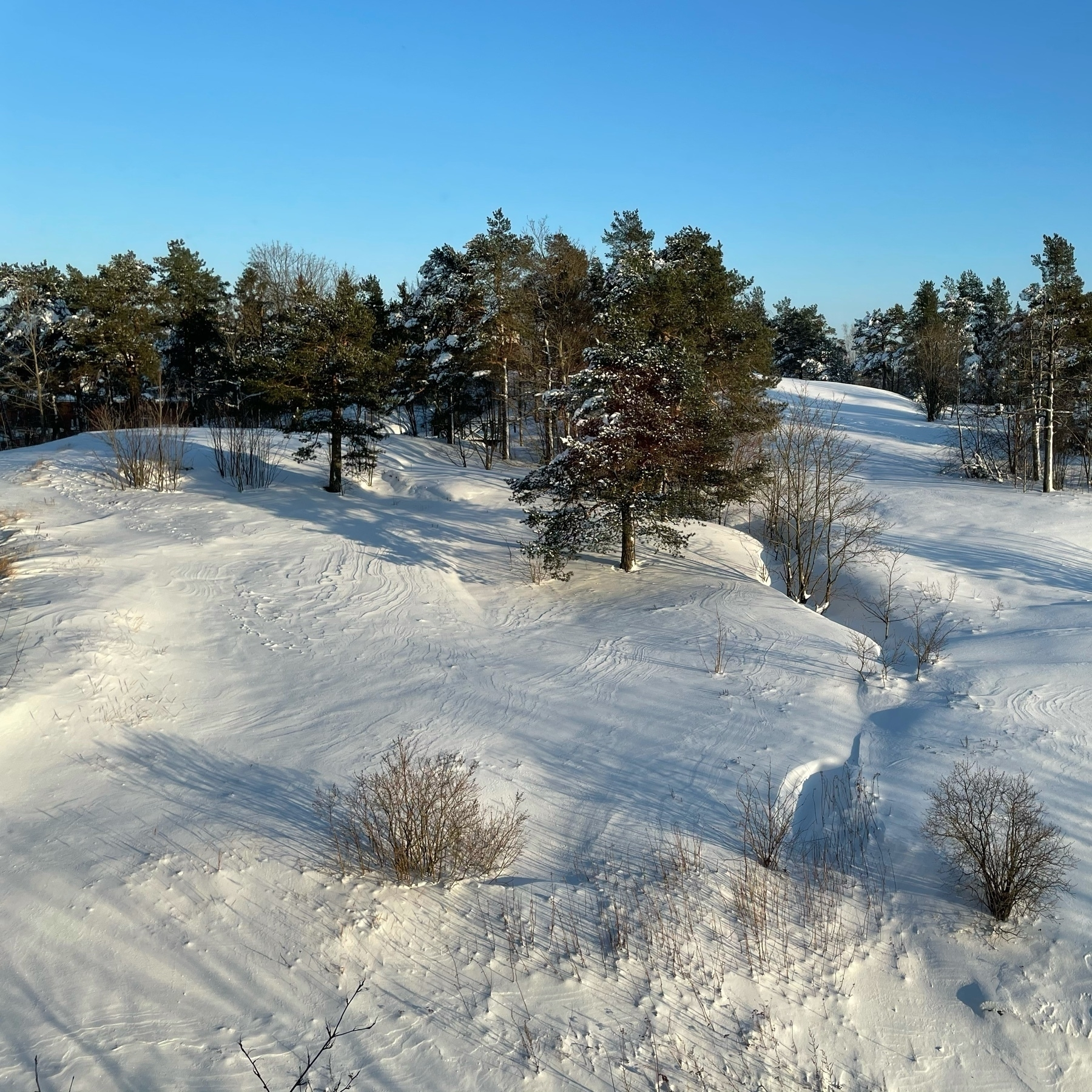 hill, with a lot of snow, some snow dunes starting to form, sun, long shadows