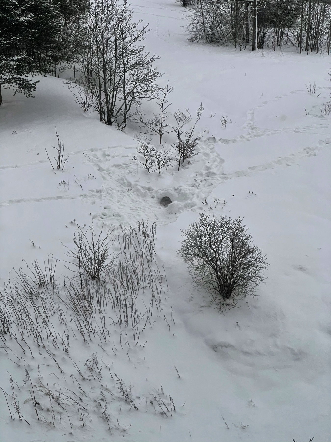 snowy hill from window, some winterseeder plants pushing through snow